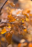 Листья и семена осени Стоковые Изображения
