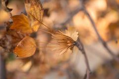 Листья и семена осени Стоковая Фотография RF