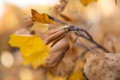 Листья и семена осени Стоковое Изображение RF