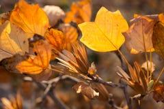 Листья и семена осени Стоковое Изображение