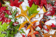 Листья и снежок падения Стоковые Фото