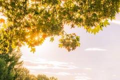 Листья и солнце осени против неба Стоковое фото RF