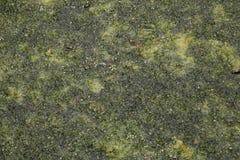 Листья и текстура травы Стоковые Изображения RF