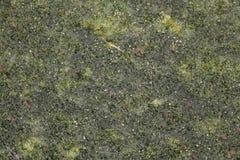 Листья и текстура травы Стоковое Изображение
