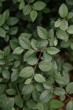 Листья и текстура травы Стоковые Изображения