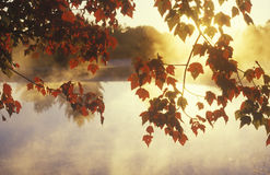 Листья и туман осени, Стоковое Изображение
