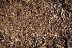 Листья и хворостины Стоковое Фото