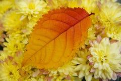 Листья и цветки осени Стоковые Изображения