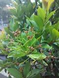 Листья и цветки Стоковое Изображение RF