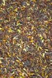 Листья и цветок тамаринда упали на том основании Стоковые Изображения RF