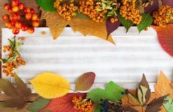 Листья и ягода осени стоковые изображения rf