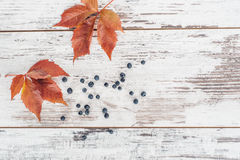 Листья и ягоды одичалой виноградины на деревянном столе Стоковая Фотография RF