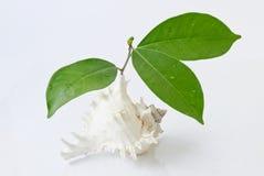 Листья и Seashell на белой предпосылке Стоковые Изображения
