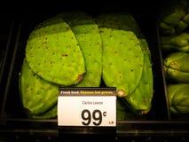 Листья кактуса Стоковая Фотография