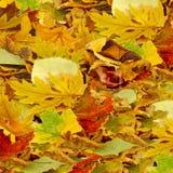 Листья как крупный план предпосылки Стоковое Изображение RF