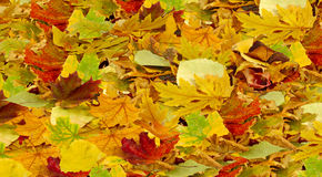 Листья как предпосылка Стоковые Фото