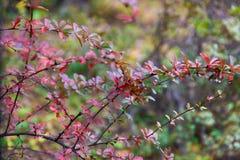 Листья как предпосылка осени Стоковое Фото