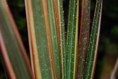 листья капек Стоковое фото RF