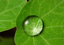листья капельки стоковое изображение
