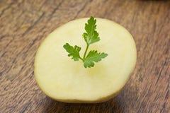 Листья картошки и петрушки Стоковое Изображение RF