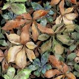 Листья каштана осени Листва ботанического сада завода лист флористическая Безшовная картина предпосылки Стоковые Фото