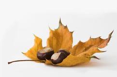 листья каштанов Стоковые Изображения RF