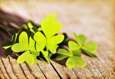 листья клевера предпосылки свежие над деревянным Стоковое Фото