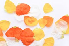 Листья клена и дуба на белой предпосылке Стоковые Изображения