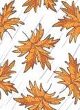 Листья клена Стоковое фото RF