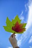 Листья клена Стоковые Изображения