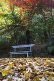 листья ковра стенда aut Стоковая Фотография RF