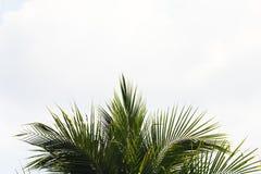 Листья кокоса в небе Стоковое Изображение