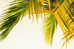Листья кокоса Стоковые Изображения