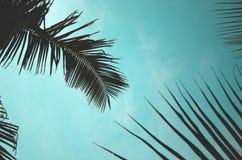 Листья кокоса Стоковая Фотография RF