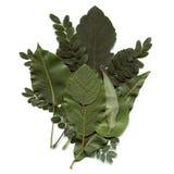 листья коллажа Стоковые Фото