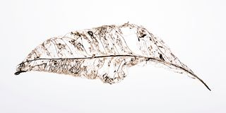 листья конспекта Стоковое Фото
