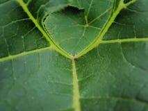листья конспекта Стоковое Изображение RF