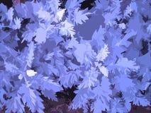 листья конструкции Стоковое Изображение RF