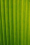 листья конструкций Стоковые Фото