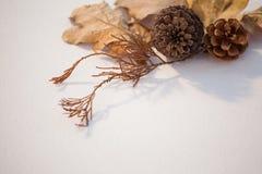 Листья конуса и осени сосны на белой предпосылке Стоковые Фото