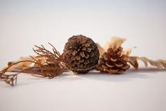 Листья конуса и осени сосны на белой предпосылке Стоковая Фотография RF