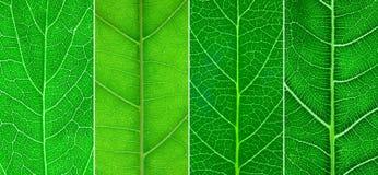 листья конца 4 различные зеленые вверх Стоковые Фотографии RF