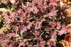 листья коричневого цвета Стоковое Изображение RF