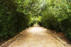 листья корридора стоковые изображения