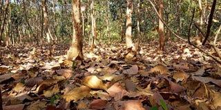 Листья которые падают стоковые изображения