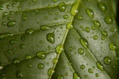листья кофе стоковые фото