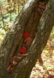 Листья красного цвета в полости упаденного дерева Стоковое Изображение RF