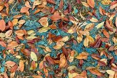 Листья красного цвета лежа на траве бирюзы Стоковые Фото