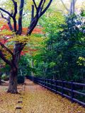Листья красного цвета и желтого цвета в осени Стоковые Изображения