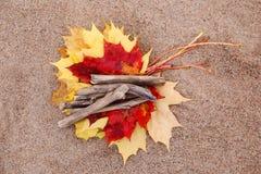 Листья красного цвета и желтого цвета Стоковая Фотография RF